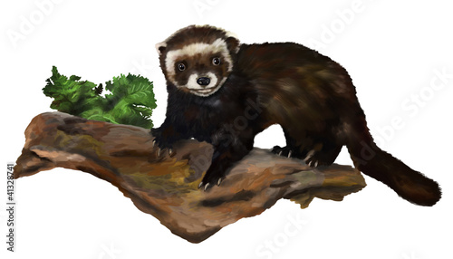 Brown ferret standing on the trunk on a white background