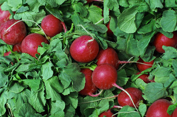 Fresh Radishes at Market