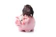 rat isolated. Piggy bank