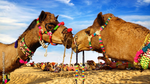 In de dag Kameel Camel Festival in Bikaner, India