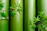 Fototapety 並べた竹とカエデの葉