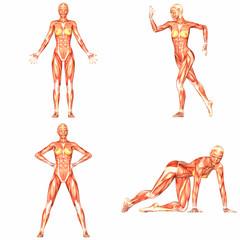 Female Human Body Anatomy Pack - 4of5