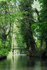 Spreewald Wasser Kanäle Natur
