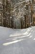 strada innevata alberi ghiaccio e neve