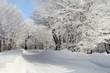 strada innevata alberi ghiaccio e neve freddo