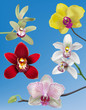 A Collection of Five Orchid Vectors -