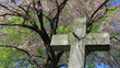 Cemetery cross statue in springtime