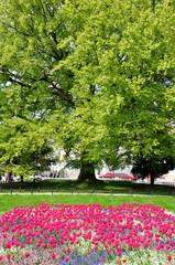 Kołobrzeg wiosną - park przy poczcie