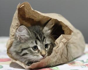 Cucciola buffa in sacchetto del pane