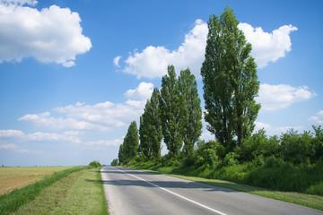 Poplar trees by the empty road