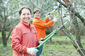 women pruning  tree in  orchard