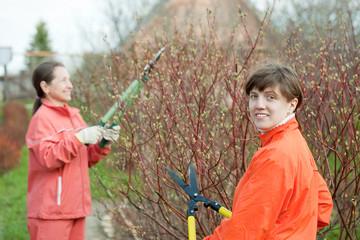 women pruning bush in  garden