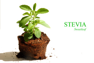 Stevia, dietary supplement
