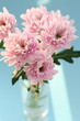 elegant bouquet of pink chrysanthem daisies in vase on turquoise