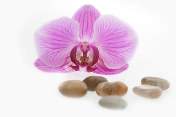 Orchide und Kieselsteine