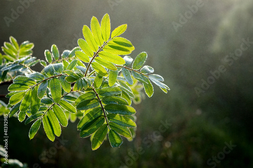 tree leaves close-up in the fog © Aleksey Stemmer