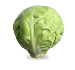 single brussels sprout isolated on white with path