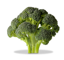brocolli tree isolated on white with clipping path