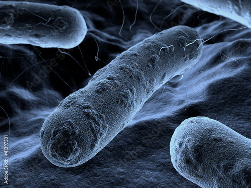Bacteria seen under a scanning microscope