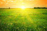 Beautiful sunset on a spring field - Fine Art prints
