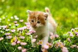 Kitten - Fine Art prints