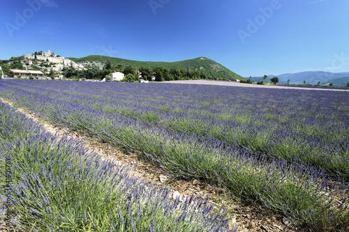 Tuinposter Olijfboom lavender landscape