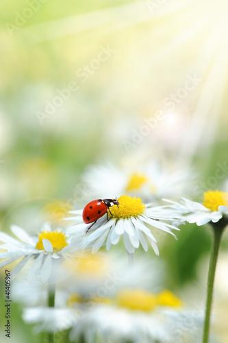 Frühling 193