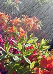 Blume giessen
