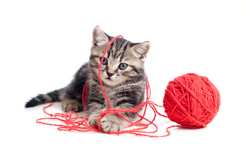 nice tabby kitten playing red clew or ball