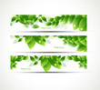 abstract eco set of headers with three different style vector