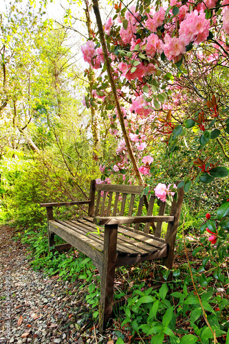 Tuinposter Azalea Beautiful romantic garden with wooden bench and azalea trees
