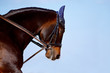 Portrait of a horse in a bridle against the sky