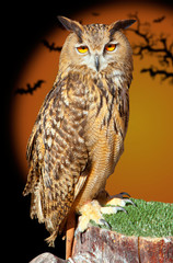 Bubo bubo eagle owl night bird