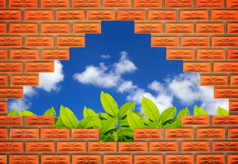 Through the brick wall with  blue sky and green Leaf