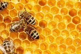 Fototapety Macro of working bee on honeycells.