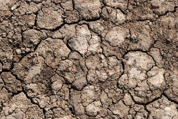 Terre sèche craquelée