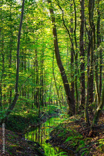 canvas print picture Wald_02