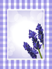 lavender on a gingham background