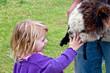 Young Girl Pets Huacaya Alpaca