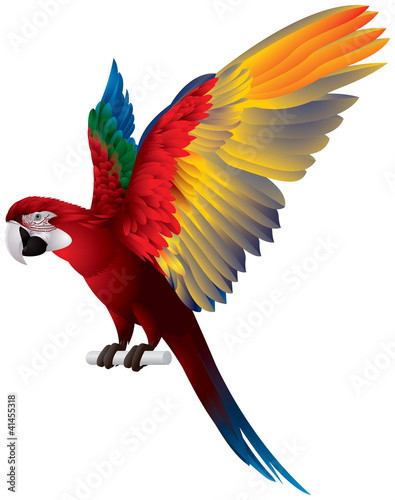 Parrot Spread Wings