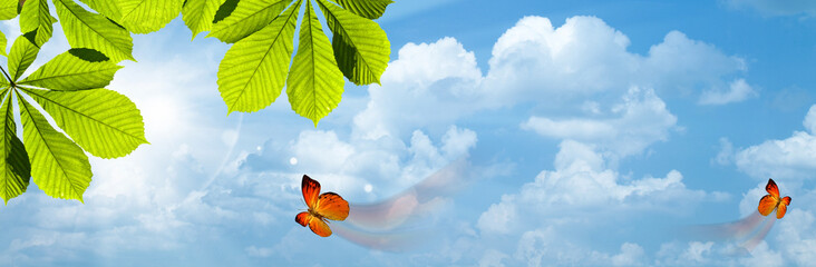 Butterfly. Blue skies with bright sun as abstract backgrounds