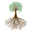 tree with roots and dense foliage, vector