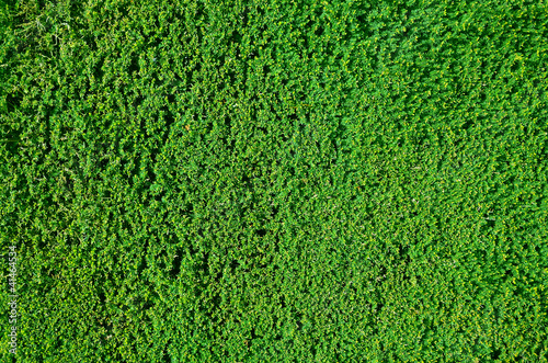 Hedge background