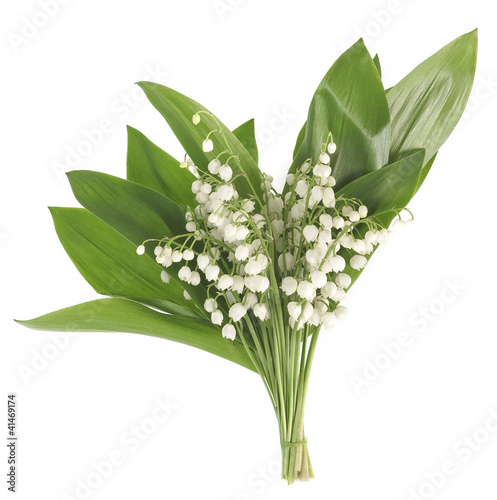 Papiers peints Muguet de mai lily of the valley on white background