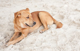 dog relaxing on beach sand in Thailand