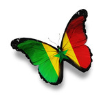 Senegal flag butterfly, isolated on white