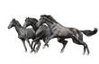 three black horses on white
