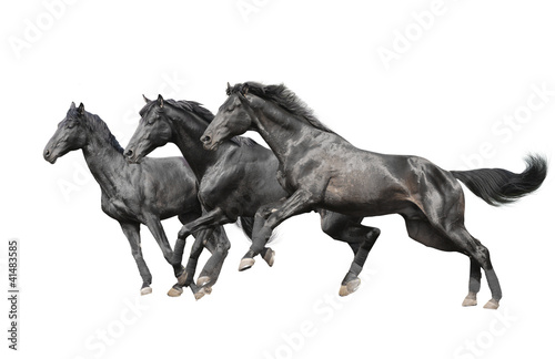 three black horses on white