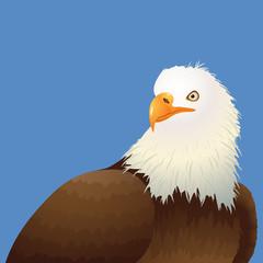 Realistic Bald Eagle illustration on Blue background