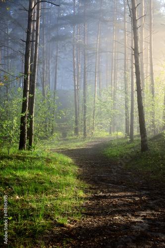 mgla-w-lesie
